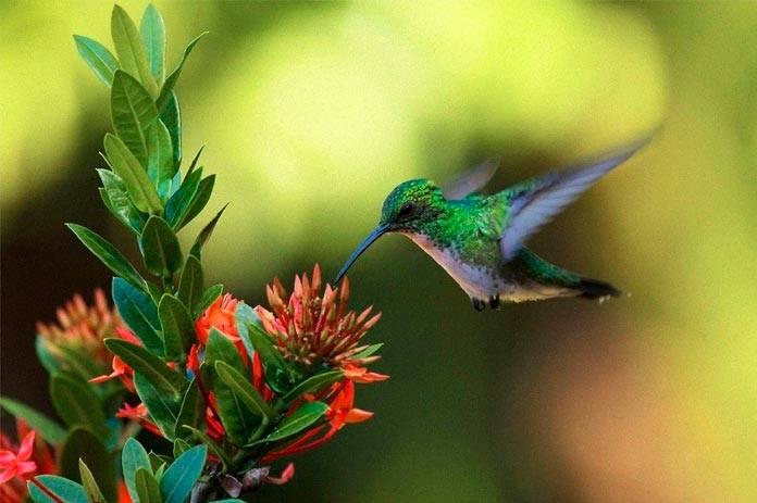 Quando você vir um beija-flor, uma alma amada veio te visitar