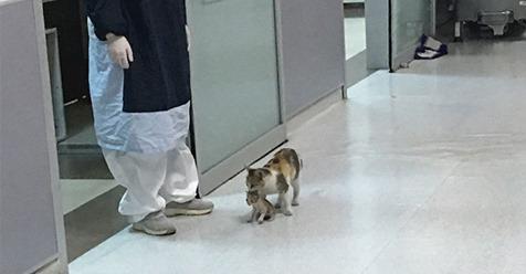 Gatinha leva seu bebê doente ao hospital e espera ser atendida