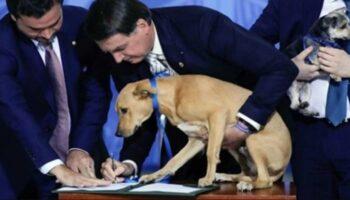 Governo aumenta pena para 5 anos de prisão para quem maltrata cães ou gatos