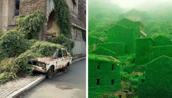 30 fotos do poder da natureza recuperando seu território