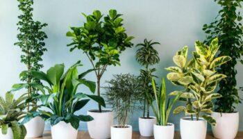 5 plantas capazes de absorver calor e purificar o ar da sua casa
