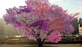 'Frankenstein', a estranha árvore que produz mais de 40 tipos de frutas