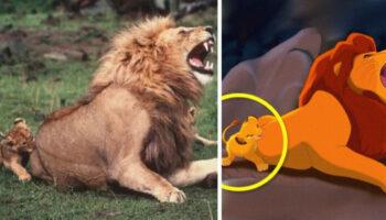 13 fotos de animais que são a cópia exata de personagens da Disney