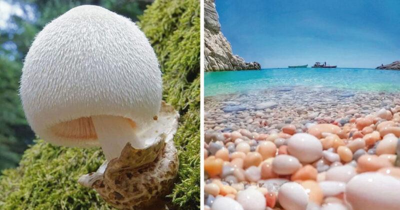 20 imagens que mostram o lado mais surpreendente da natureza