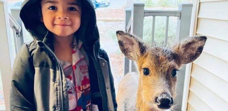 Menino de 4 anos sai para passear na floresta e chega em casa com um cervo