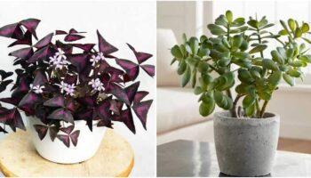 12 plantas que trazem energia positiva para casa e escritório