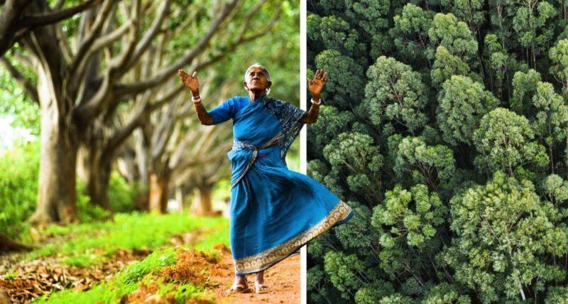 """A """"mãe das florestas"""" plantou mais de 8 mil árvores durante 80 anos"""