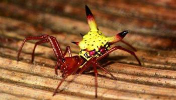 "Fotógrafo descobre ""Pikachu da vida real"" nas florestas de Honduras"