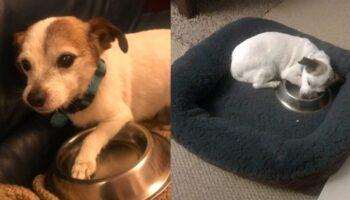 Cachorro de abrigo traumatizado dorme todas as noites com seu comedouro