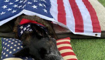 Ex-oficial da Marinha se despede de seu cachorro K9 após 15 anos