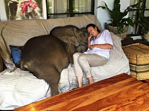 Bebê elefante não consegue parar de seguir sua salvadora depois de ser salvo da morte