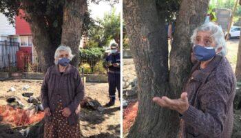 Senhora de 80 anos se agarra a uma árvore ameaçada de extinção para evitar que ela seja cortada