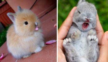 15 fotos de coelhos mais adoráveis que vão alegrar o seu dia