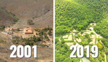 Casal brasileiro passa 20 anos plantando uma floresta inteira e milhares de animais retornam