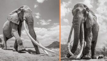 Fotógrafo registra os momentos finais da 'rainha dos elefantes'