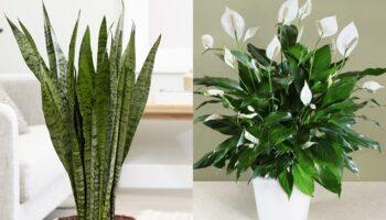 10 plantas que ajudarão a ter um microclima em sua casa