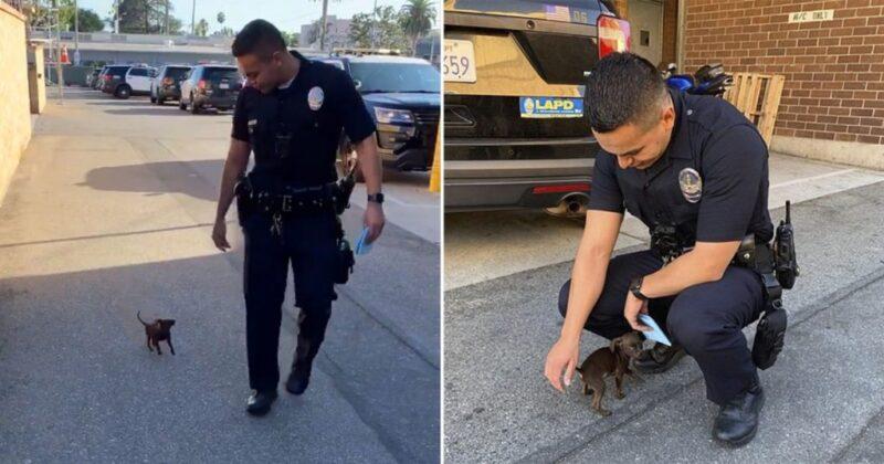 Pequeno cachorrinho abandonado na rua segue policiais em busca de ajuda