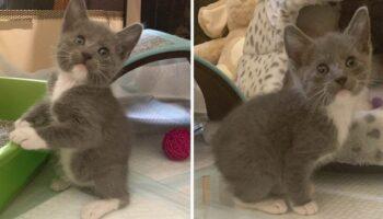 Gatinho que nasceu sem cauda e pula como um coelho consegue o lar dos seus sonhos
