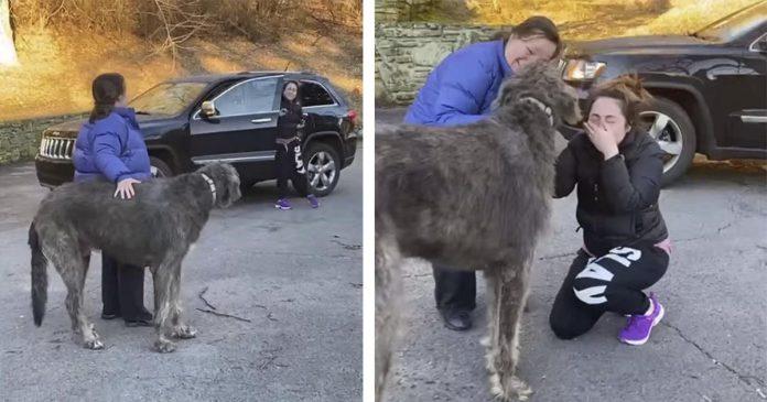 Mulher não consegue parar de chorar quando vê o cachorro que ela pensou estar perdido para sempre