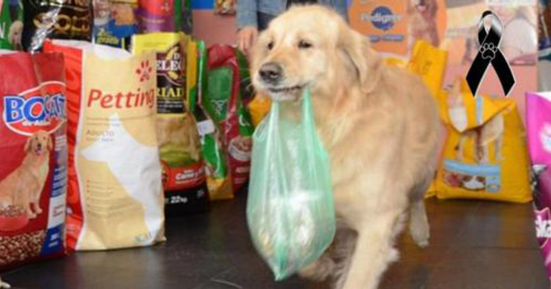 Morre Buddy, o cachorrinho que carregava no focinho uma sacola com dinheiro para pagar a sua ração