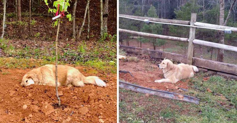 Cachorrinho de três patas chora por cada um de seus amigos quando falecem no santuário