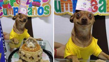 Cachorrinho está tão feliz porque se lembraram de seu aniversário