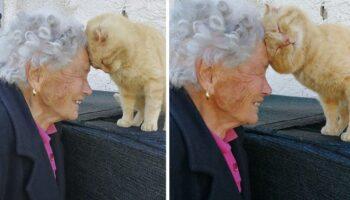 Vovó reencontra seu gatinho que estava desaparecido há quatro anos