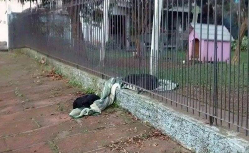 Cadelinha leva seu cobertor para dividi-lo com cachorro de rua para que ele não fique com frio