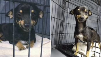 Cachorrinho resgatado consegue um lar graças ao seu enorme e lindo sorriso