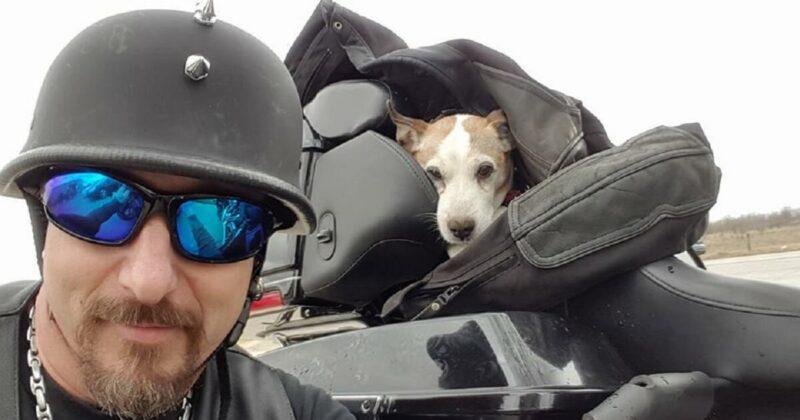 Motociclista resgata cachorro do abuso físico na estrada