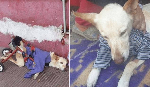Lunita, a cadela deficiente que recuperou a vontade de viver depois de ser abandonada