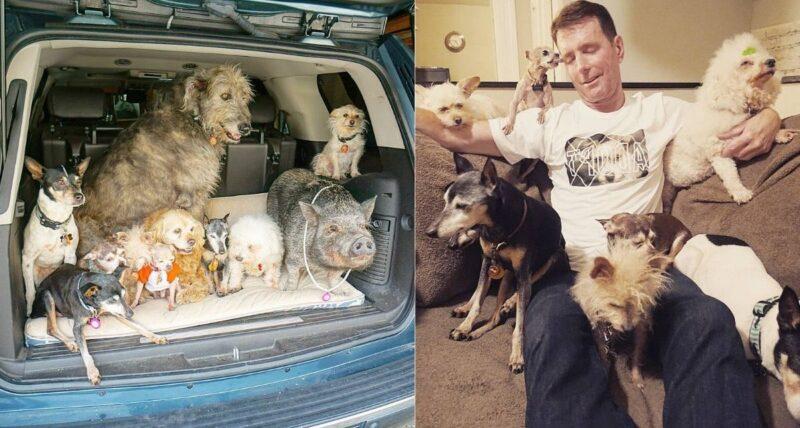 Ele foi a um abrigo e adotou 10 cães idosos que ninguém mais queria