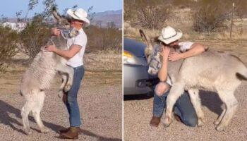 Burro adotado age como um cachorro quando vê que seu pai humano está em casa