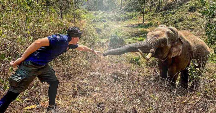 Elefante reconhece veterinário que cuidou dele há 12 anos na Tailândia