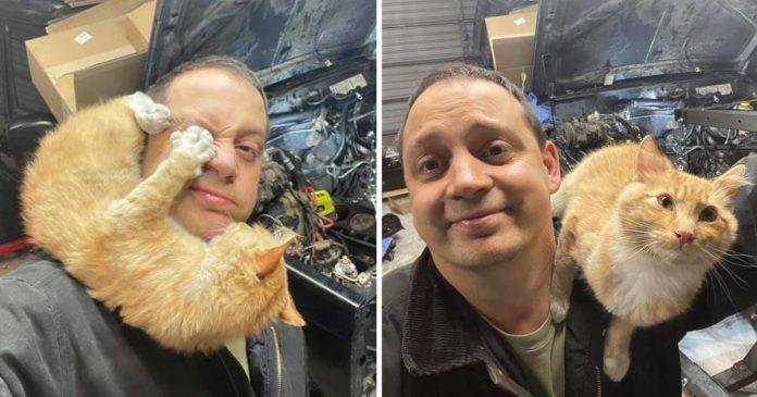 Homem encontra gatinha amigável em sua garagem enquanto consertava seu jipe