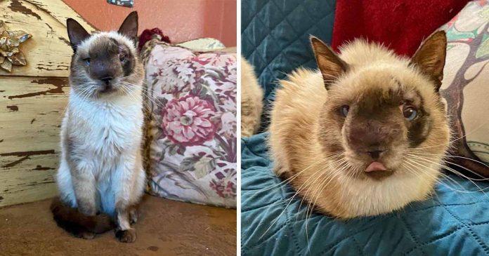 Gato com rostinho mais doce fica feliz por se recuperar depois de ser abandonado