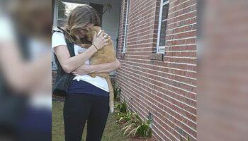 Gato pula nos braços da mãe depois de ficar perdido por 536 dias
