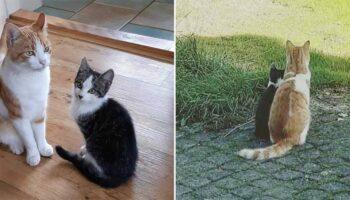 Gato faz amizade com um gatinho que encontrou no jardim e decide levá-lo para casa