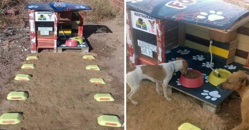 Homem constrói restaurante 24 horas para cachorros abandonados