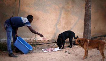 Homem palestino dedica sua vida resgatando cães na Faixa de Gaza