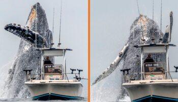 VÍDEO: BALEIA GIGANTE dá salto espetacular ao lado de um pequeno barco de pesca