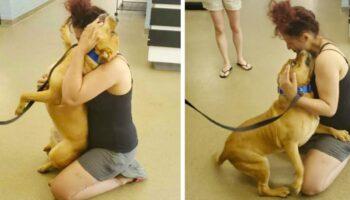 Mulher buscava adotar um pet de abrigo e encontra o cachorrinho que perdeu há 2 anos