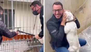 Cachorrinha agradecida não para de beijar o homem que veio para libertá-la