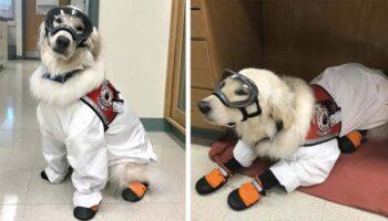 Cachorro aprende a usar óculos para poder trabalhar no laboratório com sua mãe humana