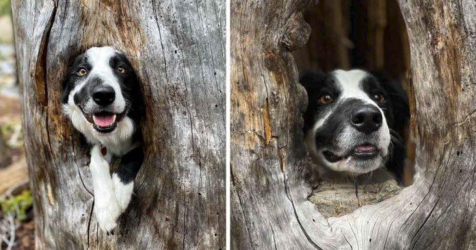 Cachorro encontra um lugar aconchegante em uma árvore e decide subir nela