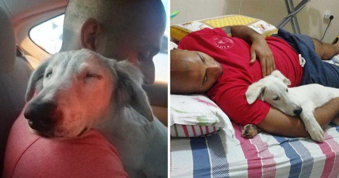 Cachorro adormece no ombro de seu salvador ao perceber que ele o levava para a casa