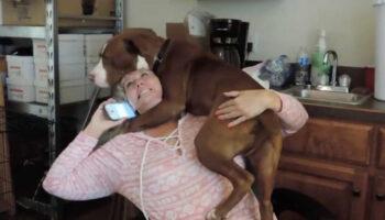 Cachorrinho recém resgatado não para de agradecer depois de ser solto das correntes