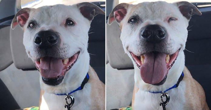 Cachorrinho resgatado não para de sorrir durante todo o caminho para casa
