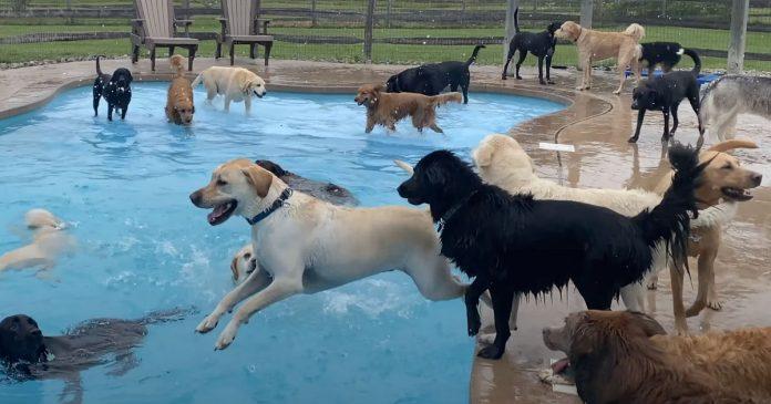 Cães se divertem em piscina em forma de osso na creche para cachorros