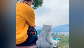 Segundo estudo, seu gatinho aprende com você e imita seu comportamento